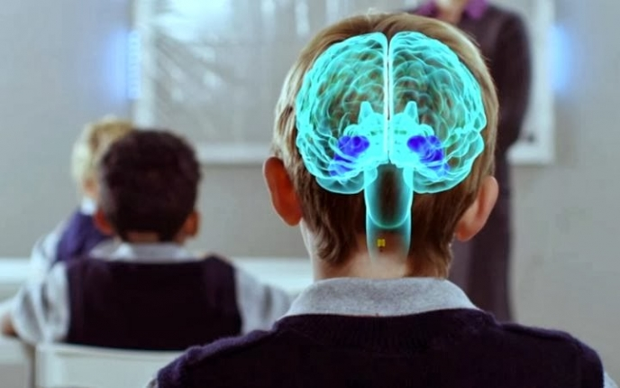Funcionamiento del cerebro y Neuroeducación
