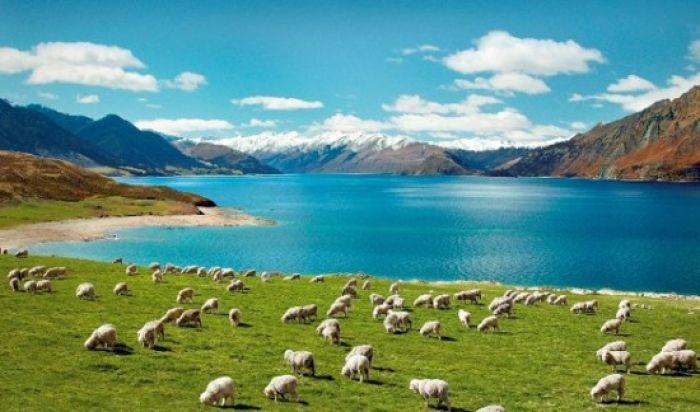 Nueva Zelanda: Beca Maestría en  Administración de Empresas Universidad de Otago